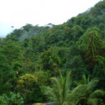 自然遺産 熱帯雨林シンハラージャ