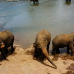 象の孤児院 津2014-6